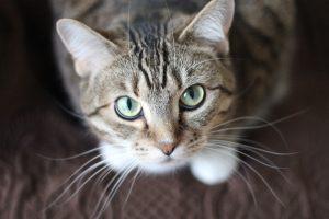 farmaci ipertiroidismo felino