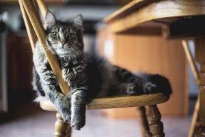 bisogni ambientali gatto