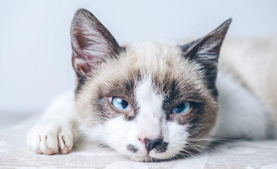 trattamento gatto